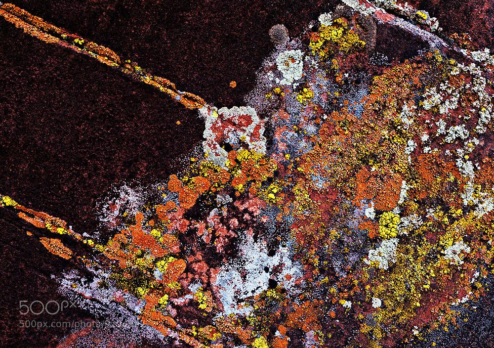 Photograph Lichen Galaxy by John Mumaw on 500px