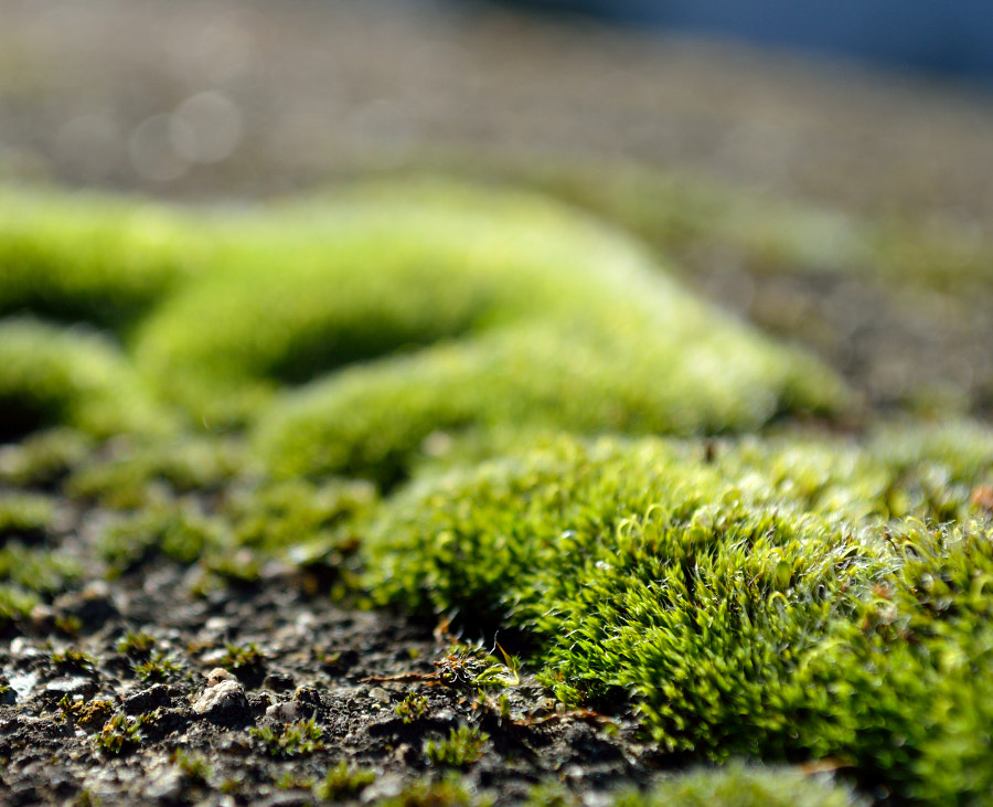 Photograph Moss Close-up & Morning Light by Papanikolaou Joanna on 500px