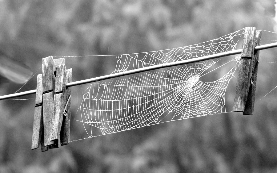 Photograph Clothspin Spiderweb B&W by Tom Lottie on 500px