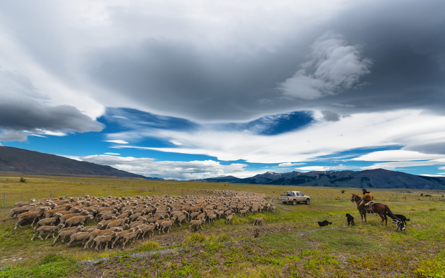 Photograph Sheep Patrol by Evgeny Tchebotarev on 500px
