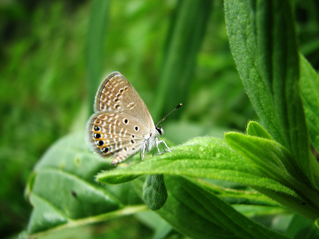 Photograph Grass Jewel by Sangeeth VS on 500px