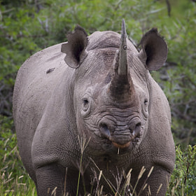 Black Rhino by Mario Moreno (mariomoreno)) on 500px.com