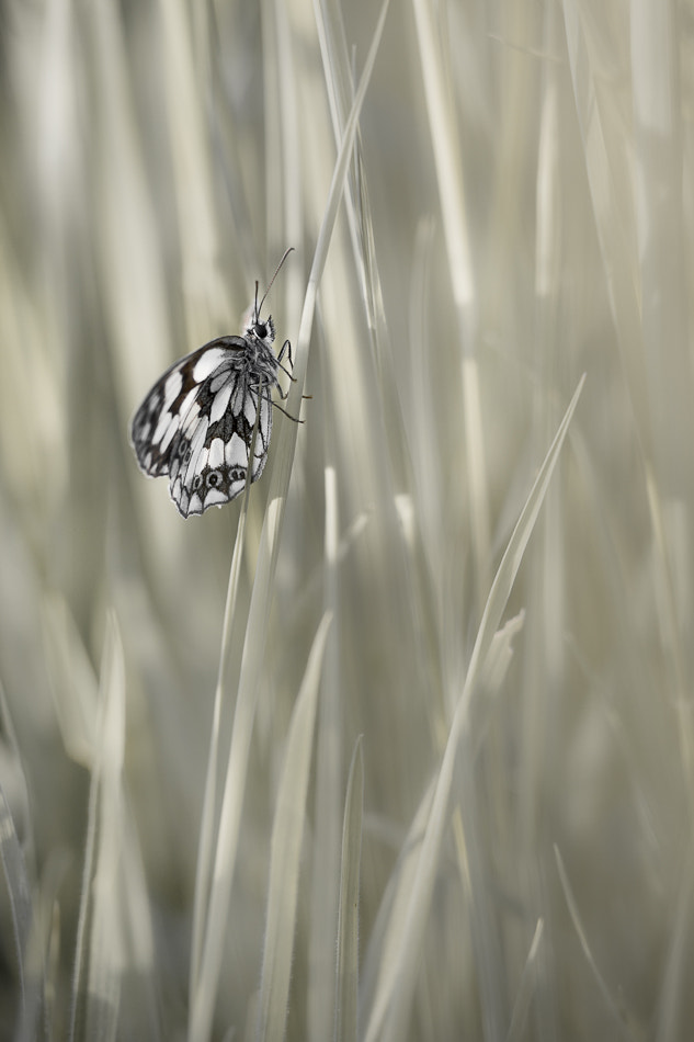 Photograph Demin deuil in white grass by PERRIN Gregory on 500px