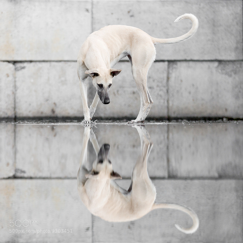 Photograph Reflections by Elke Vogelsang on 500px