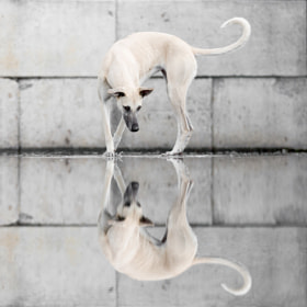 Reflections by Elke Vogelsang (Wieselblitz) on 500px.com