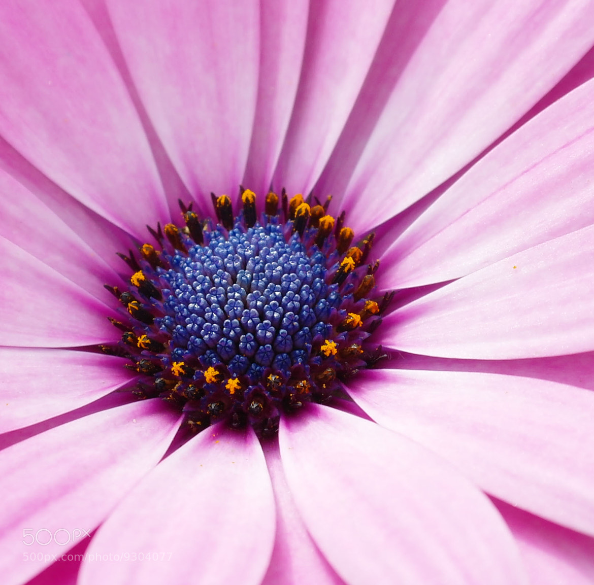 Photograph Hello Flower by Libby Hall on 500px