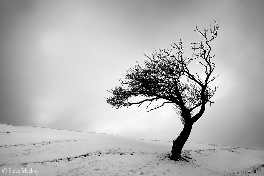 Photograph Lone Tree by Steve Mackay on 500px