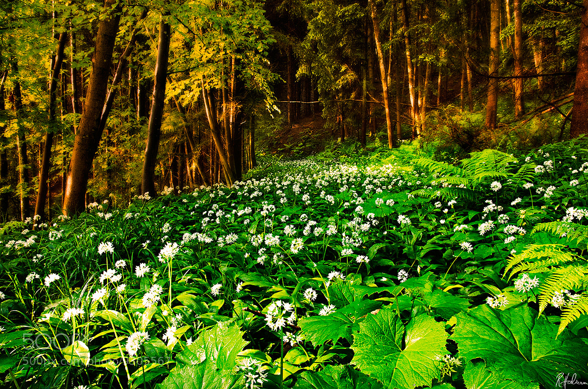 Photograph Green Forest by Robin Halioua on 500px