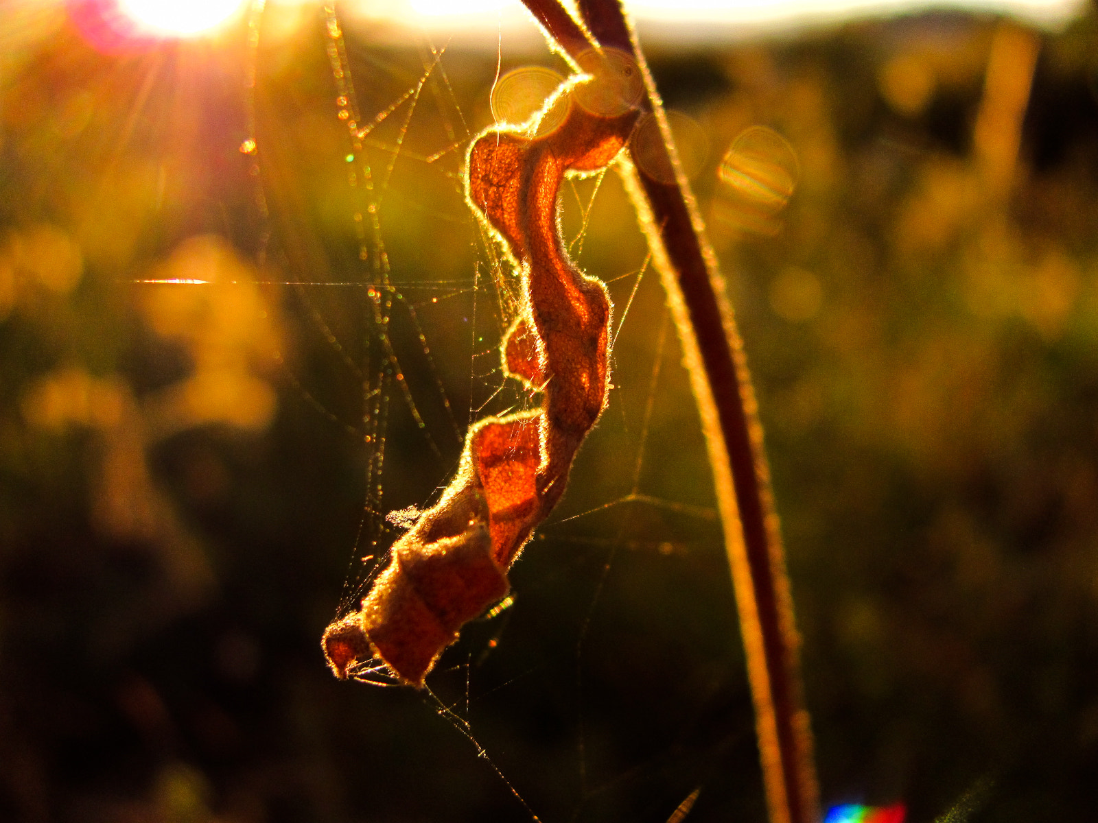 Photograph Home of a spider by Gustavo Carneiro on 500px