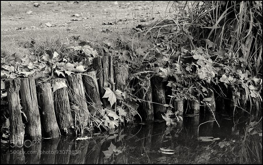 Photograph Estaques a la Tardor by Ricard Noxeus on 500px