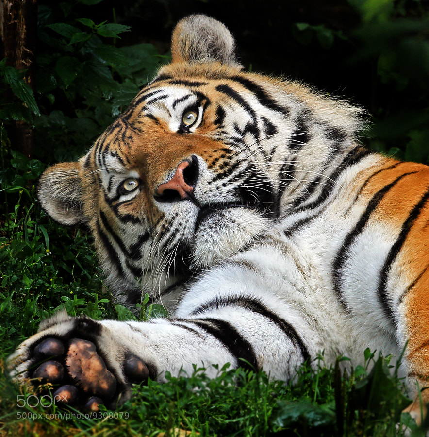 Photograph Please do not disturb by Klaus Wiese on 500px