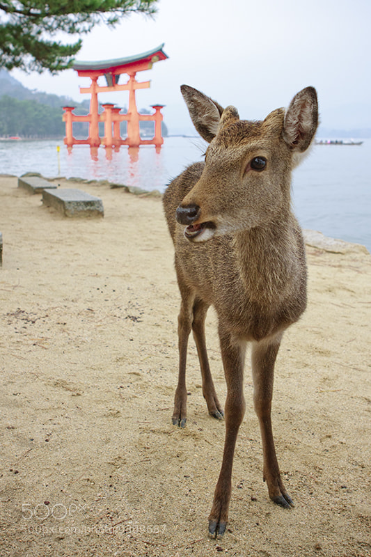 Photograph Postcard from Miyajima by Jesús Vallejo on 500px