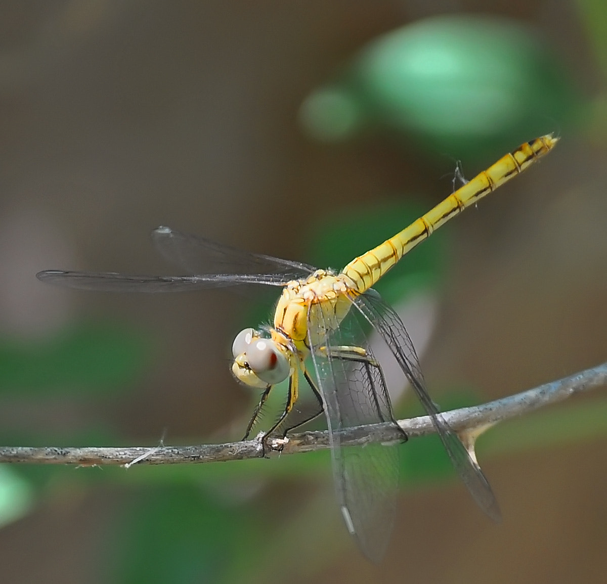 Photograph Dragonfly01 by javad afzali on 500px