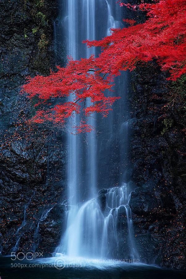 Maple Falls by Pete Wongkongkathep