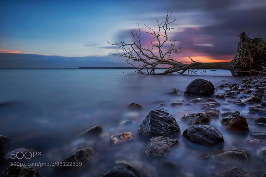 The Fallen Tree V by Martin Worsøe Jensen