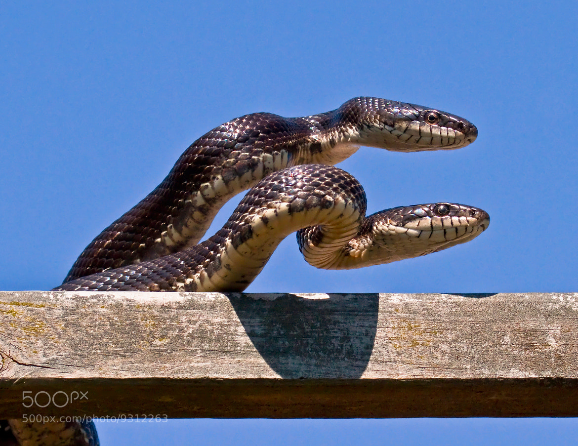 Photograph Snakes On The Roof by Lorraine Hudgins on 500px