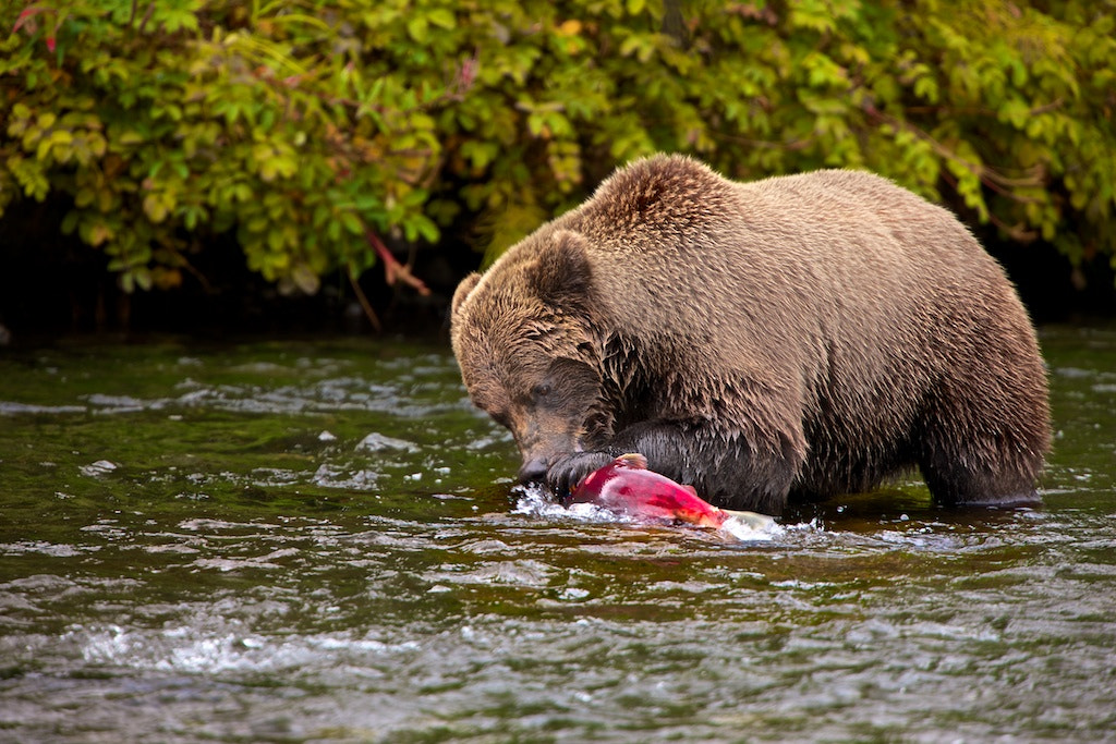Photograph Salmon Fishing by Buck Shreck on 500px