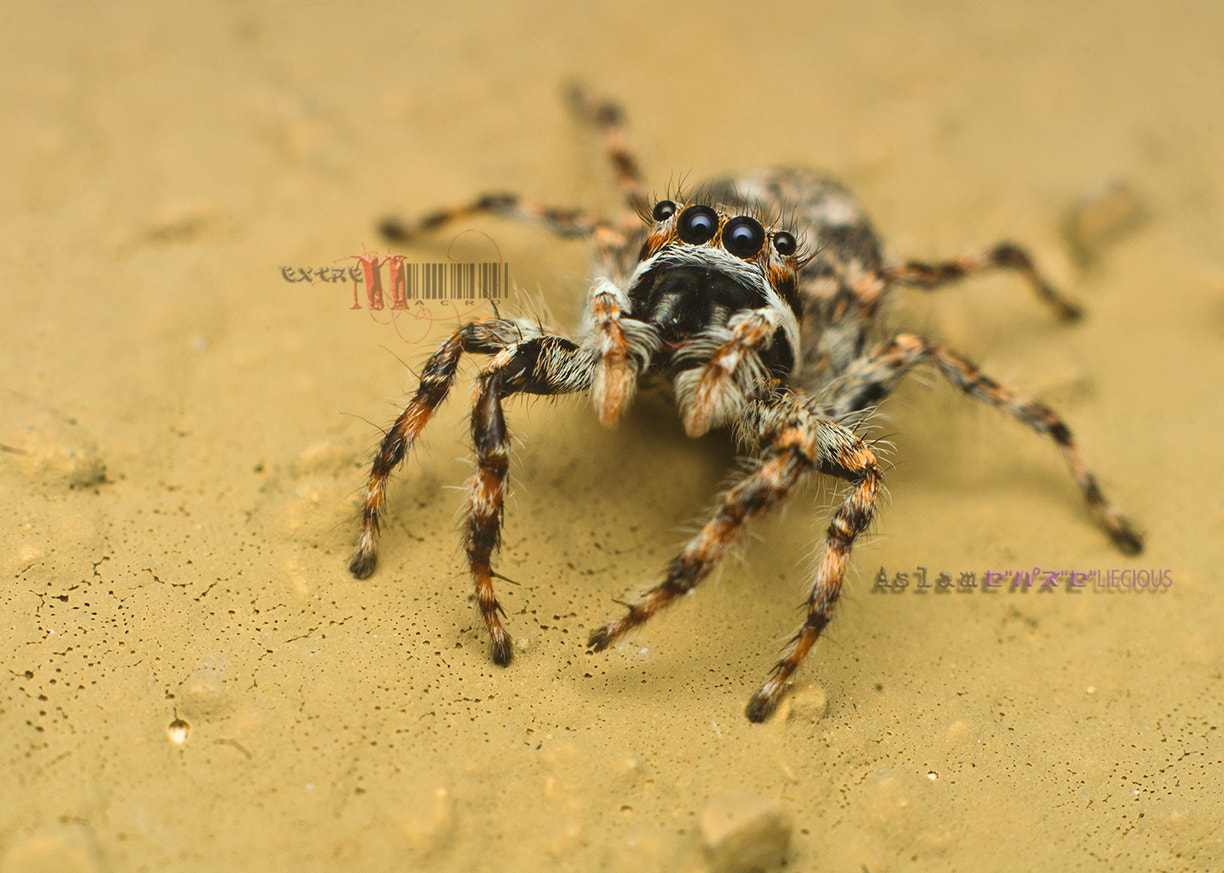 Photograph yes its me again....mr Jumper by Aslam Purpliecious on 500px