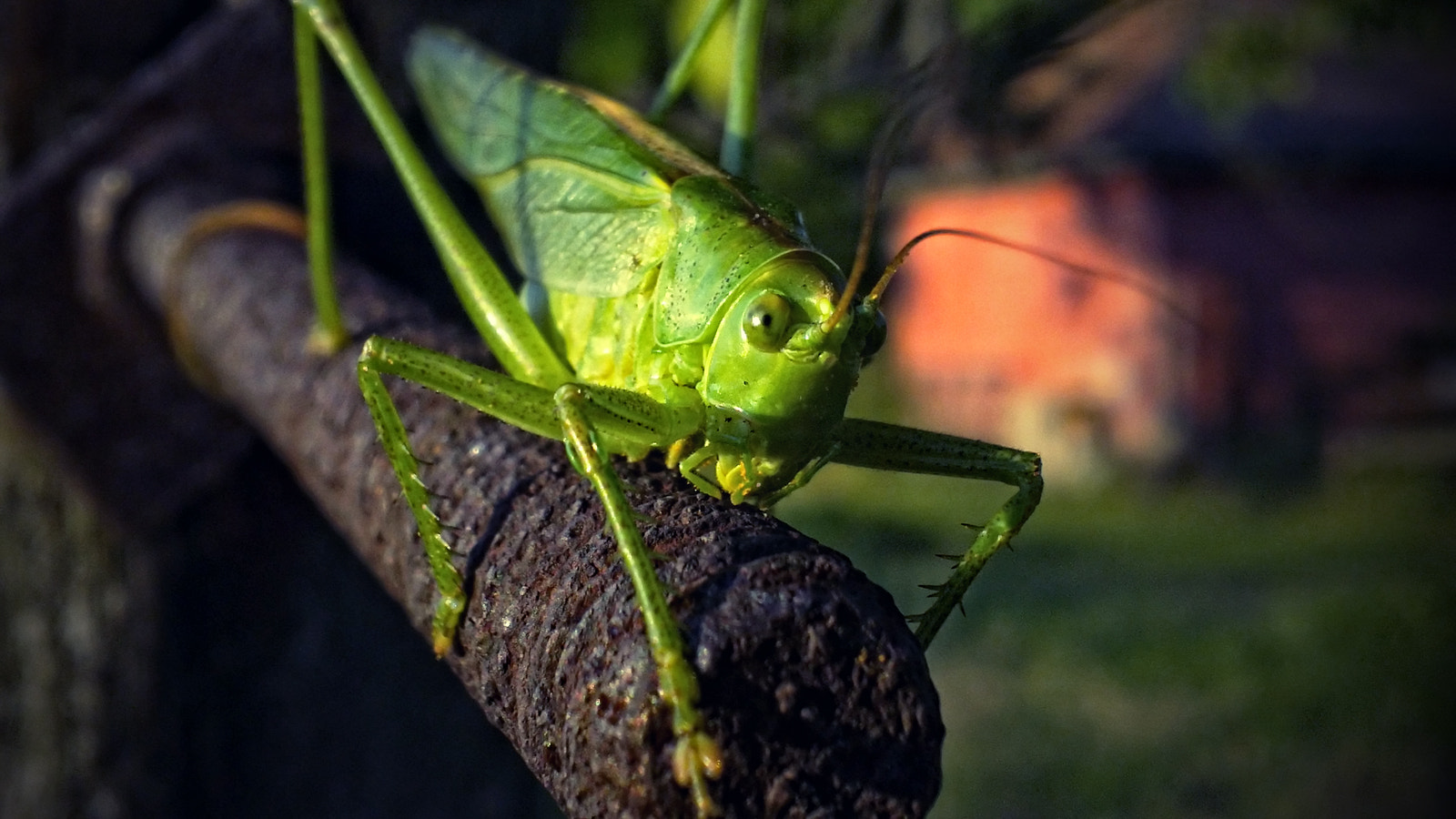 Photograph Green Locust at the end of the iron bar by Dávid Detkó on 500px