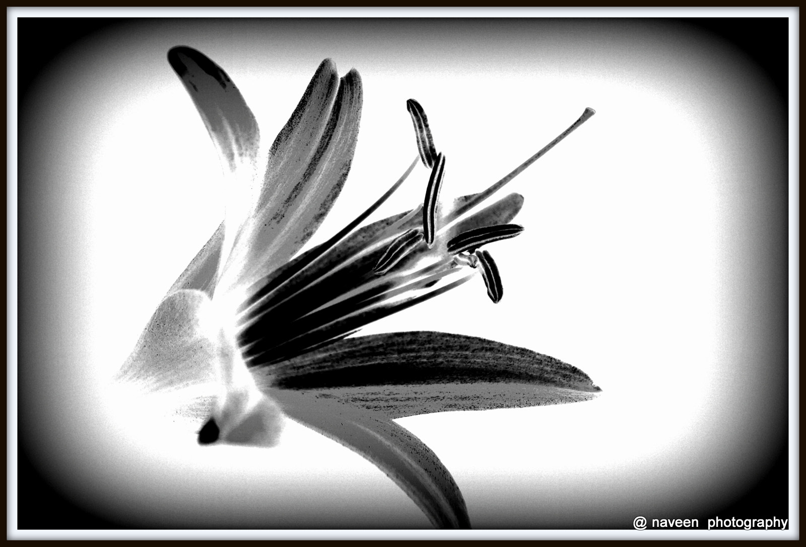 Photograph LILY IN BLACK N WHITE by naveen sharma on 500px
