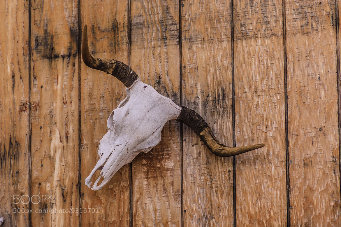 Photograph Old West Skull by Mark Ellison on 500px