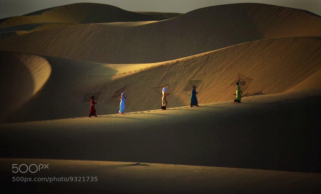 Photograph Dunes et filets by André TORRES on 500px