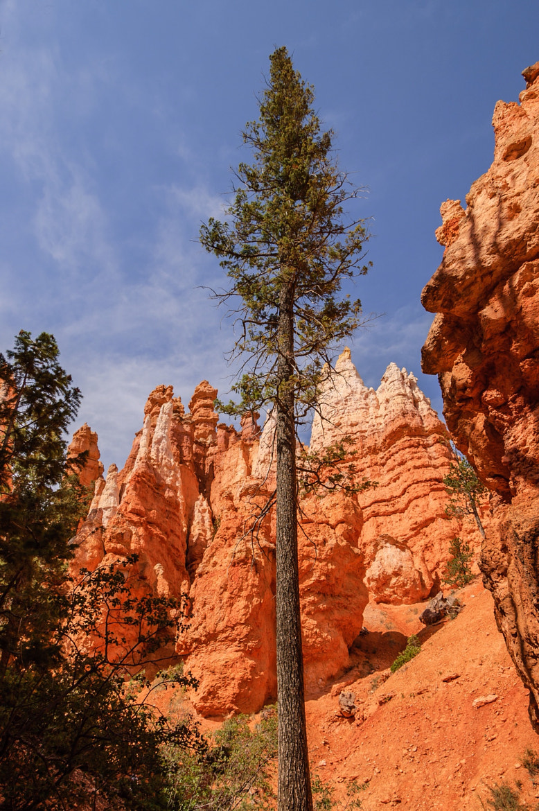 Photograph Mighty Bryce Canyon Tree by Mark Ellison on 500px