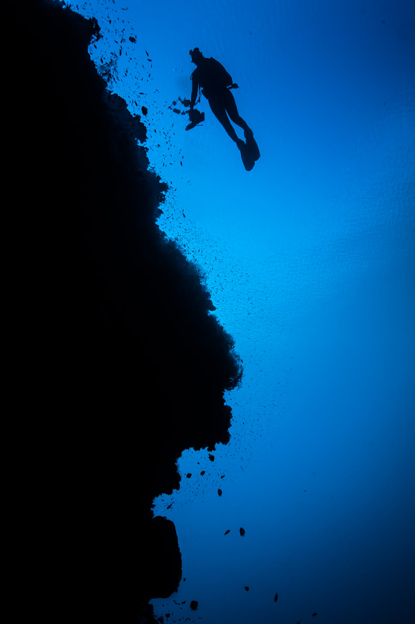 Coral Reef and Diver in Philippines