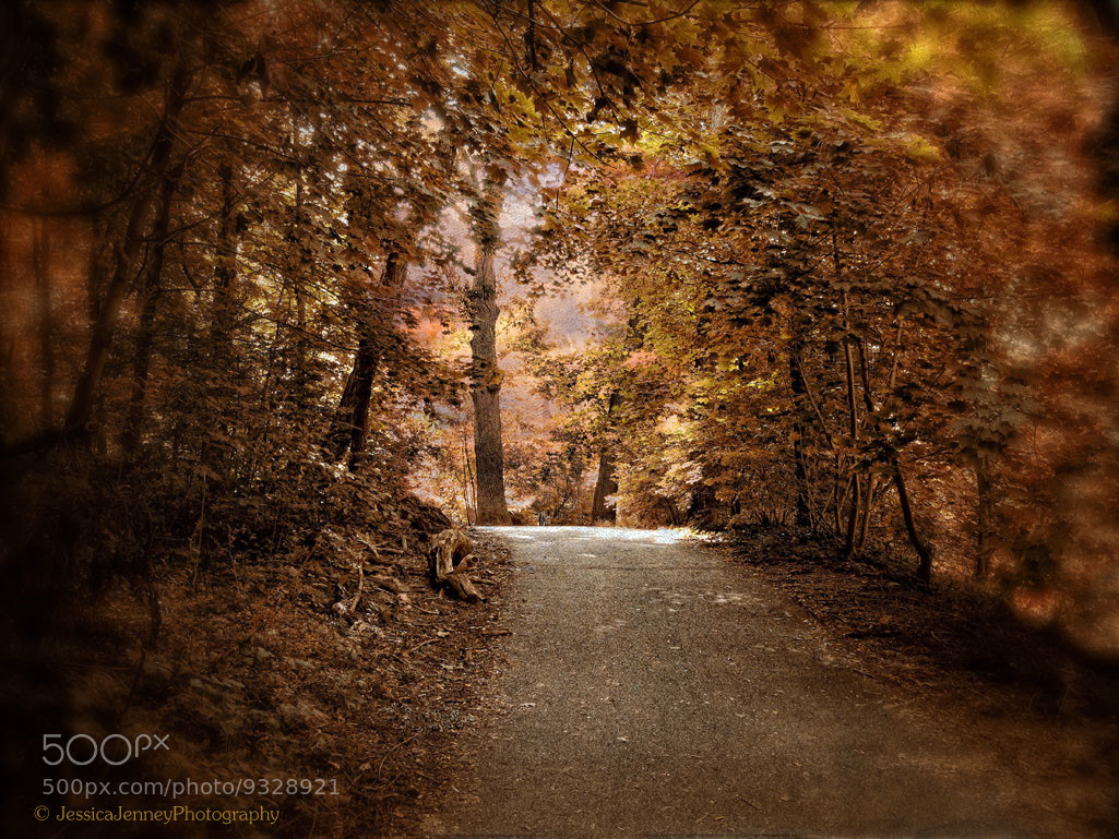 Photograph Autumn Path by Jessica Jenney on 500px