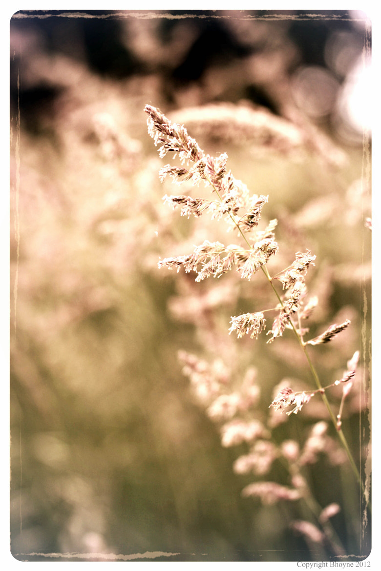 Photograph Summer breeze by Brian Hoyne on 500px