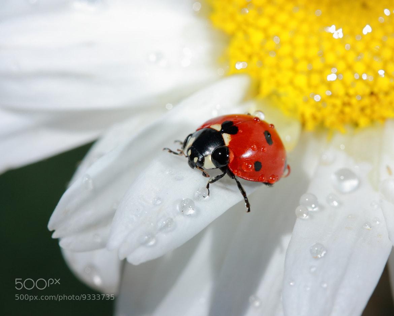 Photograph Lady Bug by Les Wynn on 500px