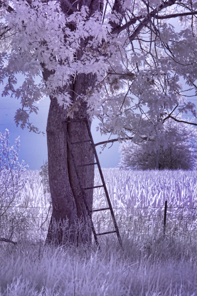 Photograph Ladder Tree by Robert Wood on 500px