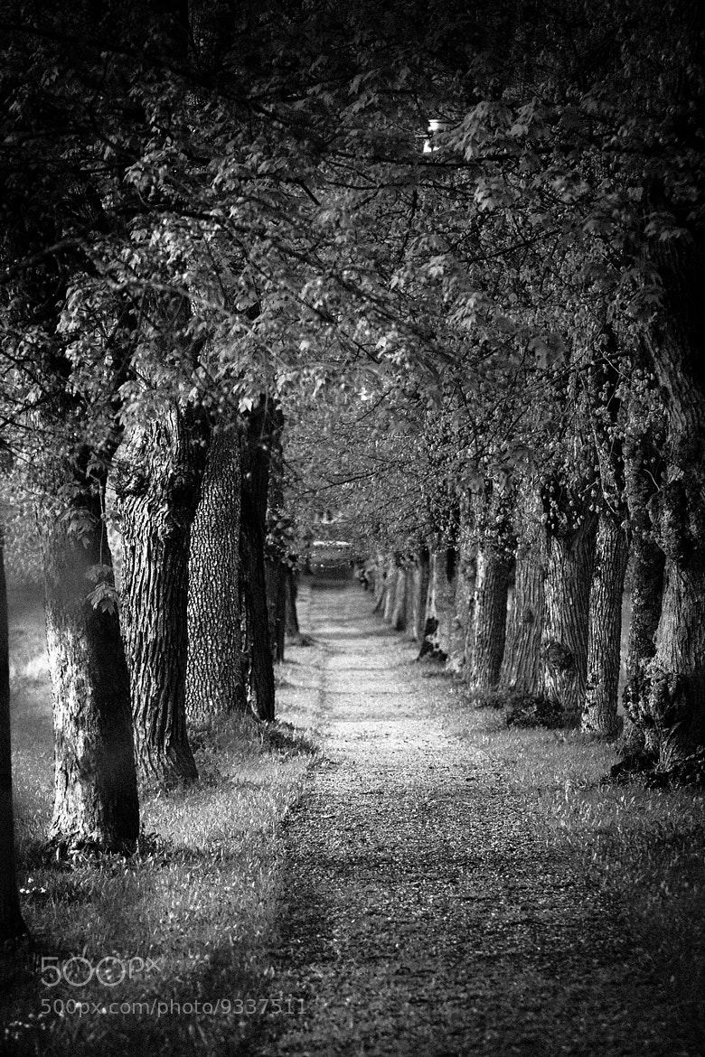Photograph The path by Henning Evju on 500px