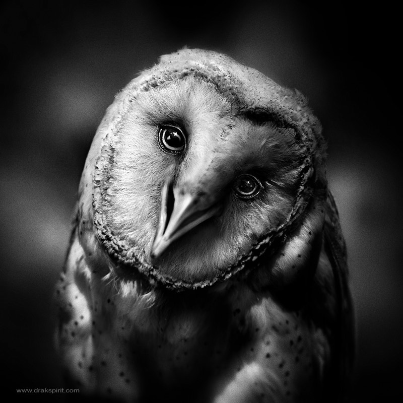 Photograph Owl can smile by Drak ? Spirit  on 500px