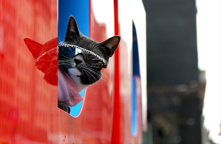 NYC COOL cat by Andrei Black on 500px.com