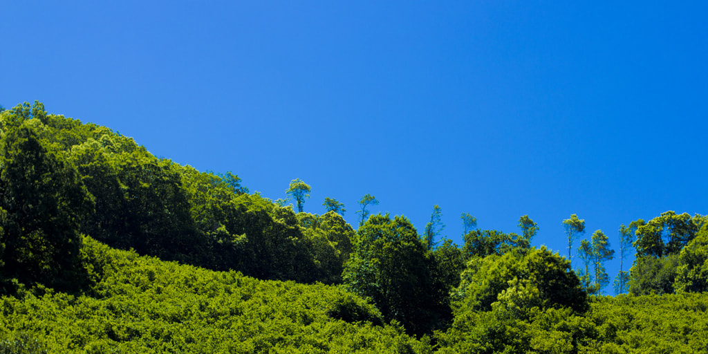 Photograph green+blue by 3112htm  ∞ on 500px