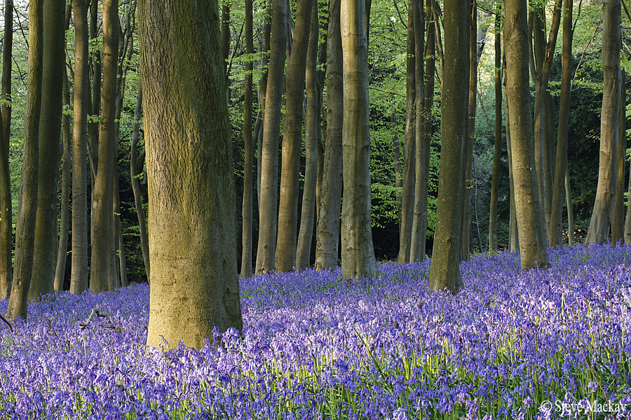 Photograph 180mm Bluebell stack by Steve Mackay on 500px