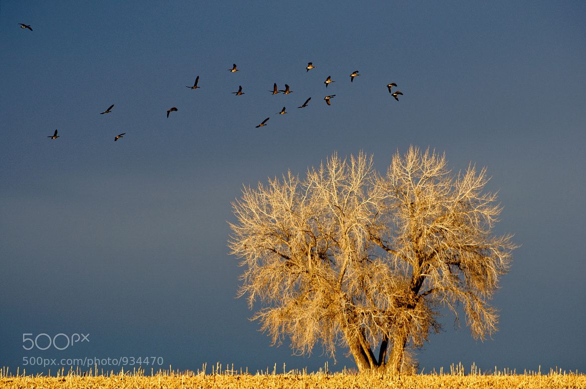 Photograph Heading to Nest by Gregg Lowrimore on 500px