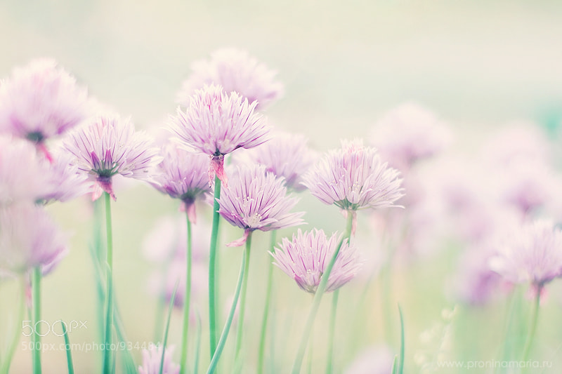Photograph Blossoming by Maria  Pronina  on 500px