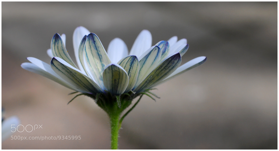 Photograph Azul e Branco by Ilidio Fernandes on 500px