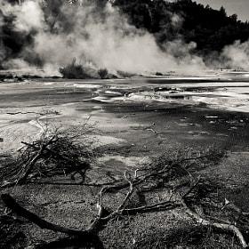 Desolate, 2012