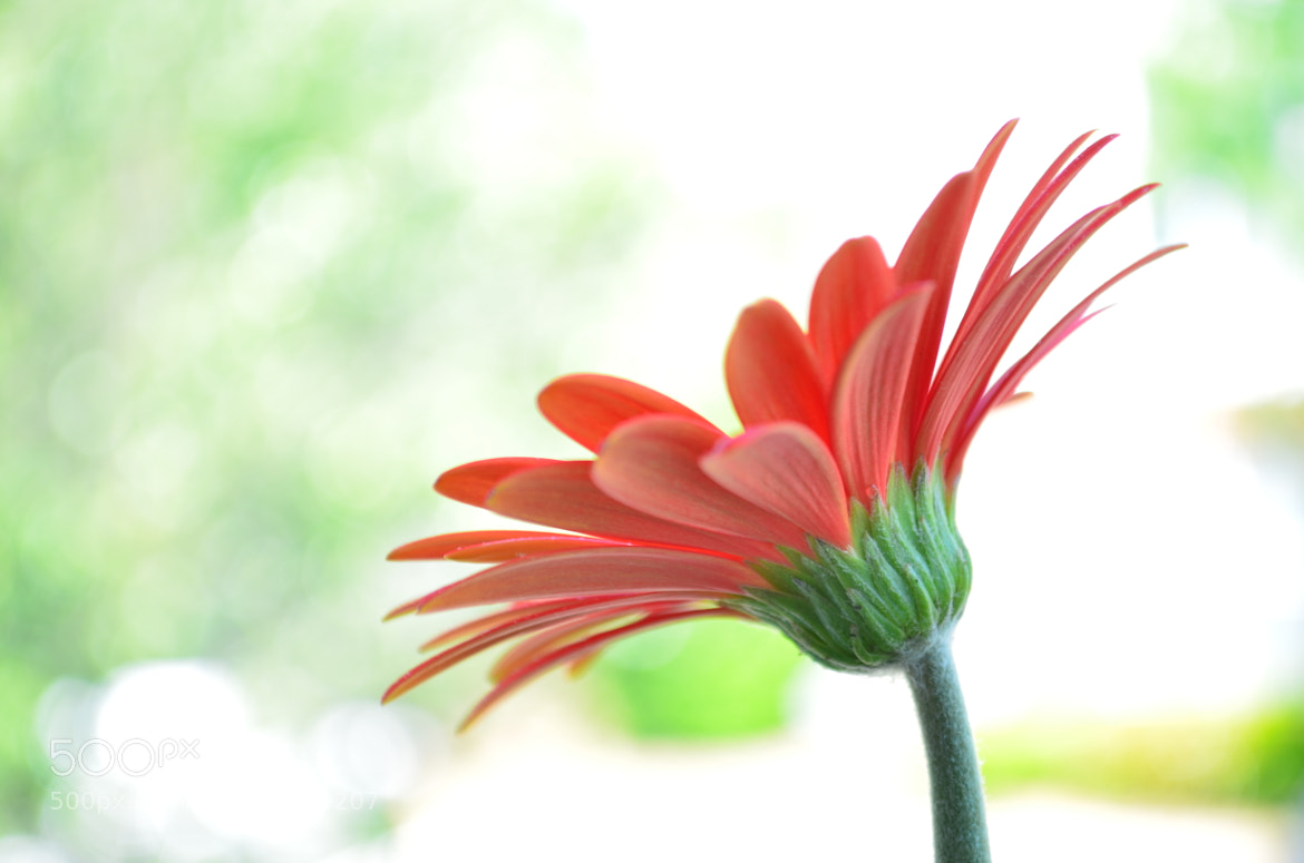 Photograph Patio Bloom by Vibhuti Sinha on 500px