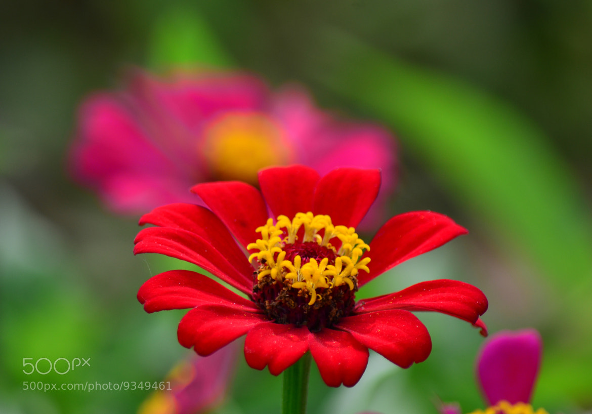 Photograph Red 08/07/07/2012 by Harikrishnan Nair on 500px