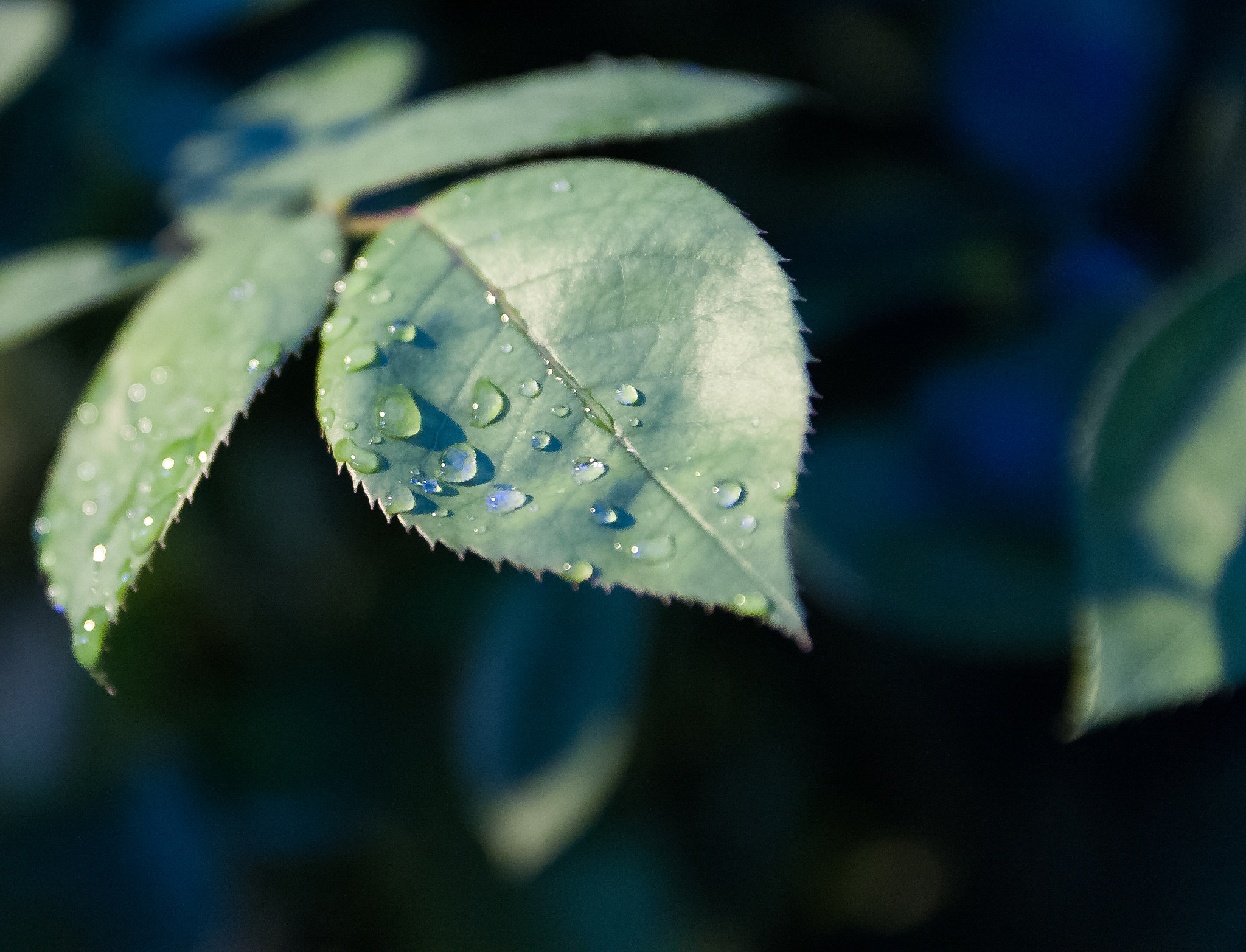 Photograph After the Rain by Ash Furrow on 500px