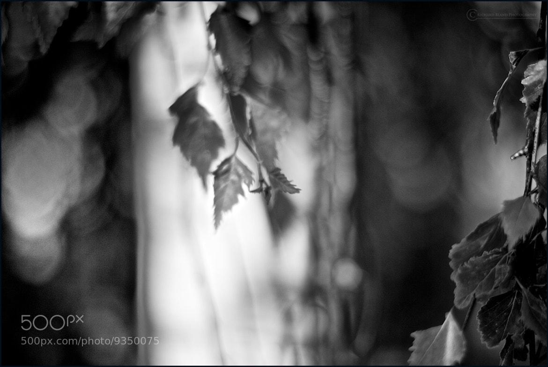 Photograph Curtain by Richard Bland on 500px