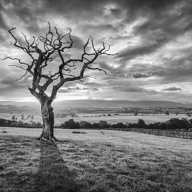 Tree by Mark Littlejohn (MarkLJ)) on 500px.com