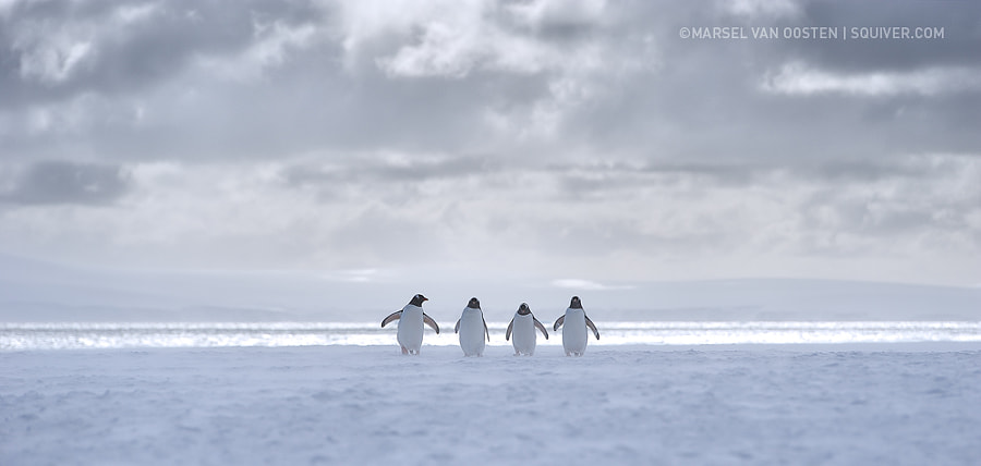 Cool & The Gang by Marsel van Oosten on 500px.com