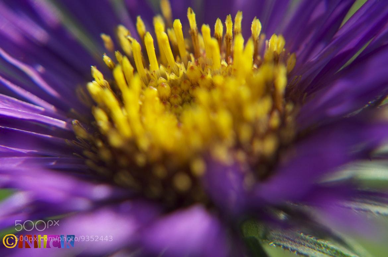 Photograph Yellow & Purple  by Nick Hamdan on 500px