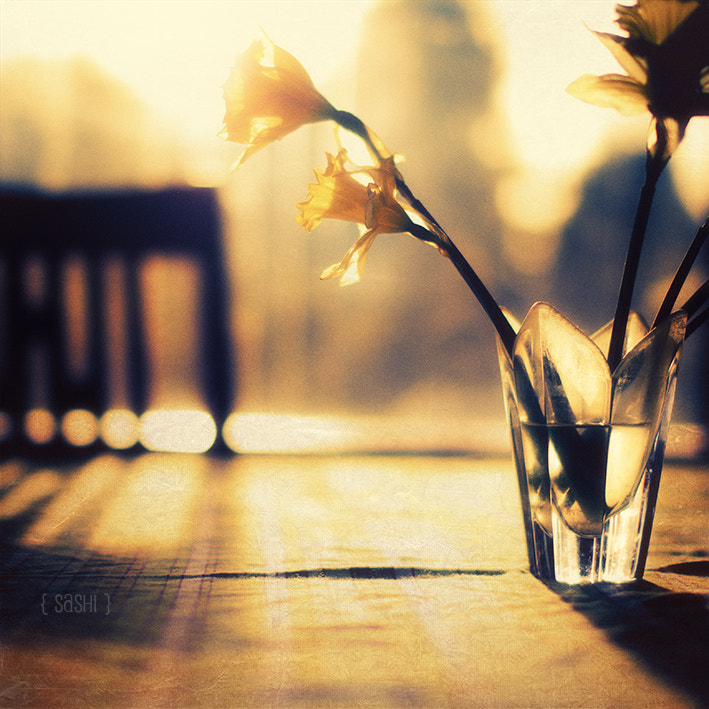 Photograph Morning Light, Daffodils by Alex Arnaoudov on 500px