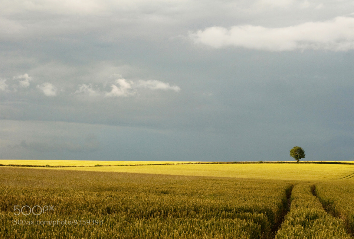 Photograph Wheat Field  2 by Zoritza Williams on 500px